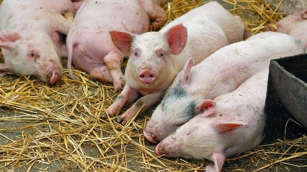 Татарстан заработал на животноводстве 11 млрд рублей в 2019 году. 27026.jpeg