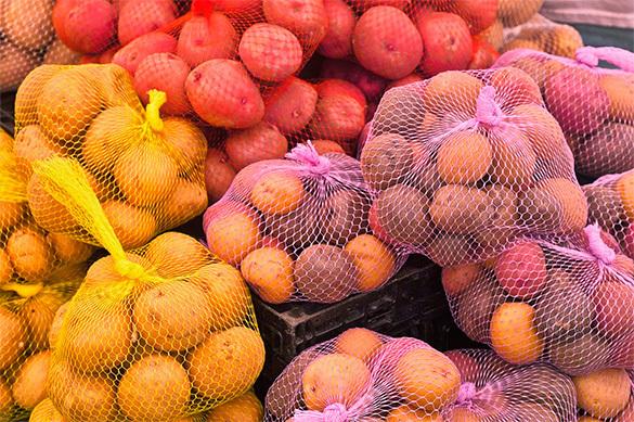 В Ярославской области появится агропромышленный кластер. картофель