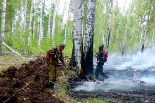 В СПЧ заявили о массовом сокрытии данных о лесных пожарах в Приангарье. СПЧ, пожары, Приангарье