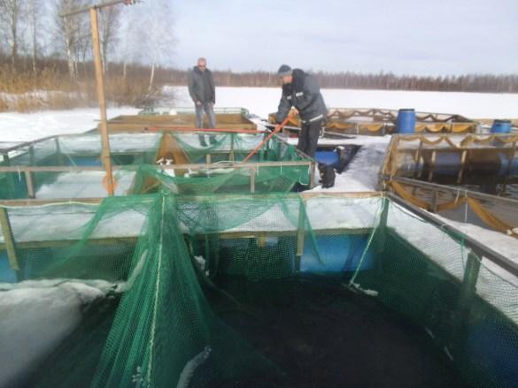 Предприниматель из Ярославской области участвует в федеральной программе ее развития. рыбохозяйство