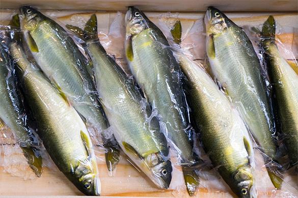 В Ярославской области разводят сиговые породы рыб. рыба