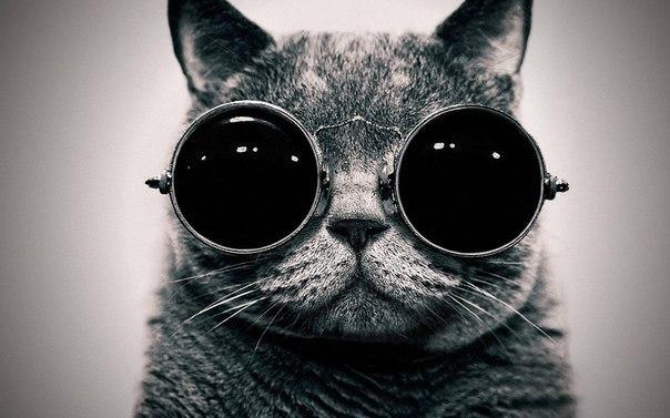 О котах и счастье