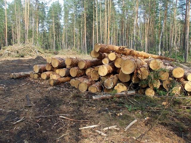 Инвесторы отрасли  лесозаготовки Башкирии получат 50% возмещения. 26635.jpeg