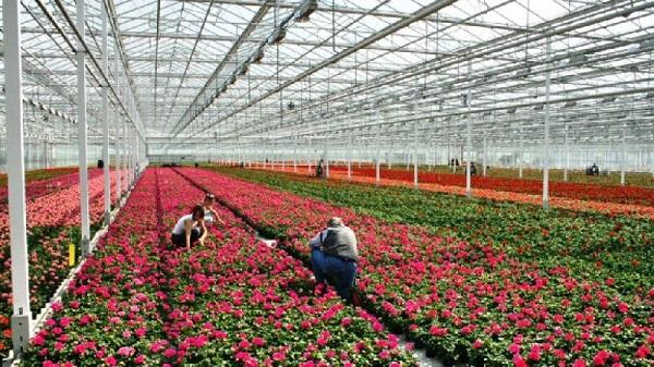Теплицу под Смоленском будет строить цветочная компания из Польши. 26659.jpeg