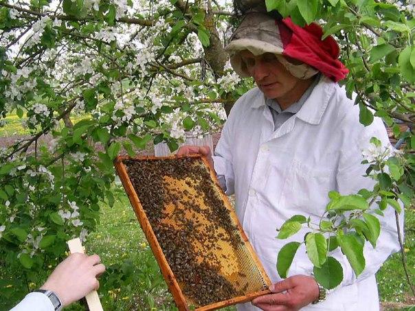Бизнес-план: Пчеловодство