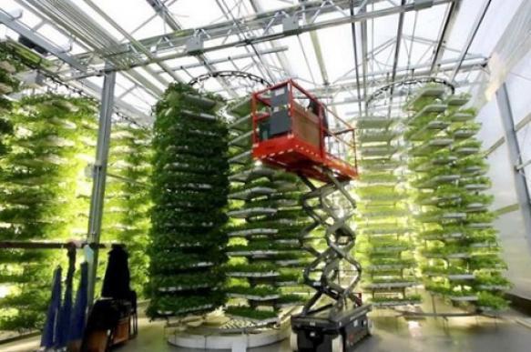 На территории бывшего табачного завода в Южном округе Москвы откроют ферму. 26783.jpeg