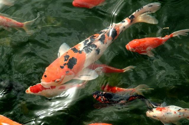 В Японии продали самую дорогую рыбу планеты. 26856.jpeg