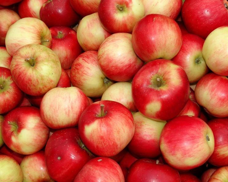 Бизнесмен Араз Агаларов инвестировал в сады с эко-фруктами  200 млн рублей. 26963.jpeg