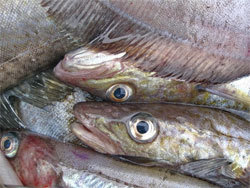 Эксперт: Пока мы продаем рыбу в непереработанном виде, выгода минимальна