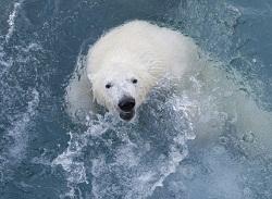 Бурение Shell в Арктике приведет к новой глобальной катастрофе - эколог