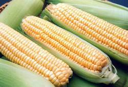 Продуктам с ГМО закроют путь в Россию