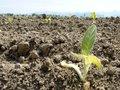 Как накормить планету, не уничтожая ее?