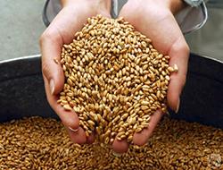 Россия экспортировала почти 20 миллионов тонн зерна