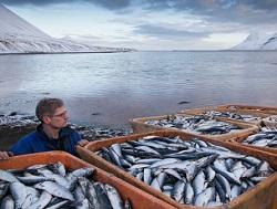 Росрыболовство: Креветки из Ирана займут место канадских и норвежских