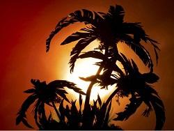 Русскую кашу пальмовым маслом не испортишь