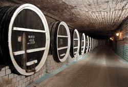Молдавия строит винные Нью-Васюки
