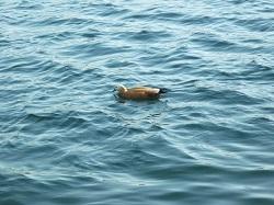 Франция спускает на воду ДВДК  Владивосток