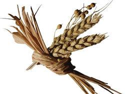 Ставропольские аграрии собрали 4,2 млн тонн зерна