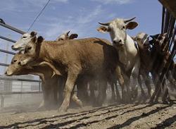 В Орловщине процветает частное фермерство