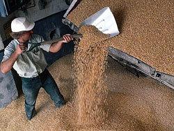 Россия экспортировала 19 млн тонн зерна - Зубков