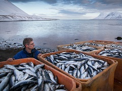 Виталий Корнев: Дальневосточная рыба идет в Россию через Китай