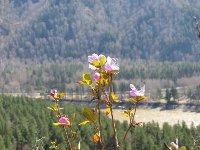Аграрные высоты Алтайского края