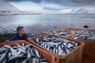 Норвегия считает санкции со стороны России не обоснованными