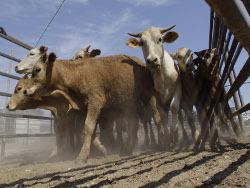Правительство поддержит фермеров на 3,5 млрд руб