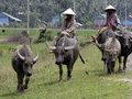 Путешествие во времени: свобода тайского бата