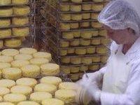 Роспотребнадзор запретил ввоз в Россию сыров из Украины