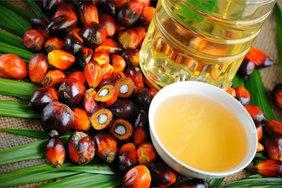 В России могут запретить пальмовое масло