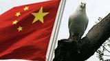 Песков: Визит Путина в Пекин - хороший повод подписать договор по газу