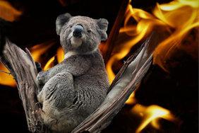 На восстановление Австралии после пожаров потребуется 100 лет