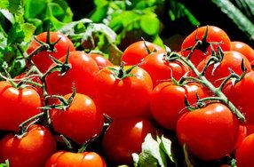 Турция пожаловалась на проблемы с экспортом помидоров в Россию