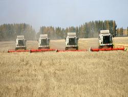 В 2012 году ожидается рекордное производство пшеницы