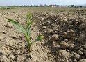 В этом году зерновое хозяйство будет прибыльным - эксперт