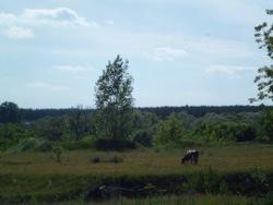 Шойгу разбирается с Бородинским полем