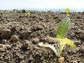 Цена на удобрения выросла, несмотря на скидки - фермер