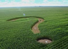 Минсельхоз лишил зернопроизводителей моржи - эксперт