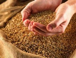 Минсельхоз приостановил закупочные зерновые интервенции