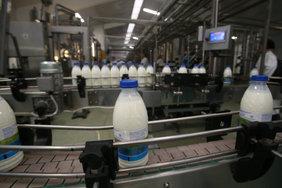 В Адыгее запустили производство готовой продукции из козьего молока