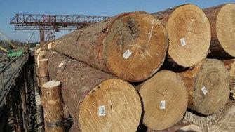 В России ужесточили наказание за незаконный экспорт древесины
