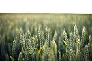 Как ростовский агрохолдинг убивает село