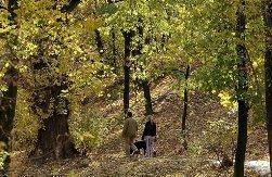 Алтайские елки находятся под усиленной охраной