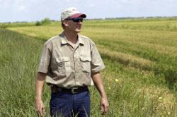 Урожай зерна в 2012 году сократится до 80 млн тонн