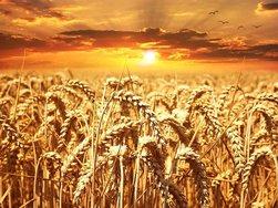 В России снова выросли экспортные цены на пшеницу