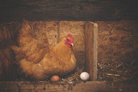 Минсельхоз прокомментировал рост цен на мясо птицы и яйца