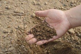 Российский АПК побил рекорд по закупке минеральных удобрений