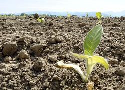 Владимир Чикин: Семена, удобрения и техника подорожали на 40%