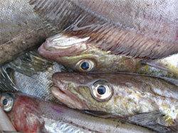 Тимур Митупов: Россельхознадзор гробит рынок отечественной рыбы